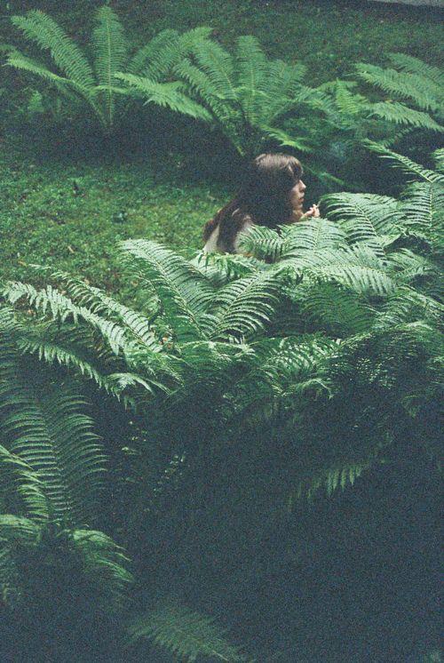 Follow Plants, Not Gurus, Terence McKenna, The Jungle Paper