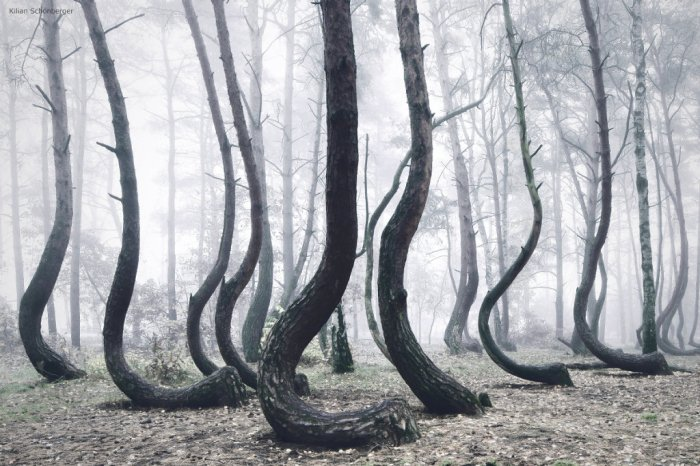 Kilian Schoenberger_Crooked Forest_Photography